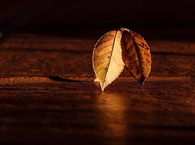 blues automne
